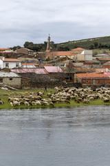 Ovejas pueblo