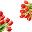 red tulip flowers frame background
