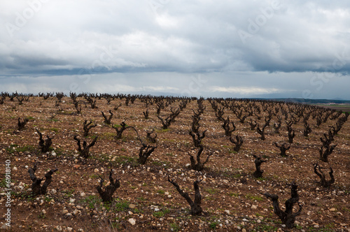 Vineyards in winter cloudy day. La Rioja, Spain