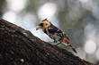 Knallbunter seltener Vogel