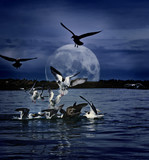 Gulls gathering at night under full moon digital art