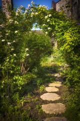 Summer garden and path