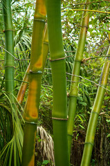 green and golden bamboo