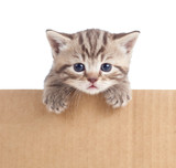 kitten in cardboard box