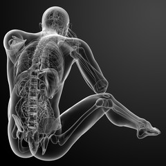 3d render Human antomy - back view
