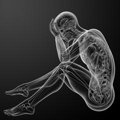 3d render Human anatomy - side view