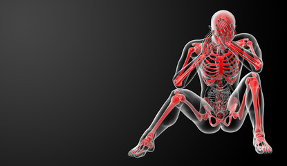 Red skeleton - front view