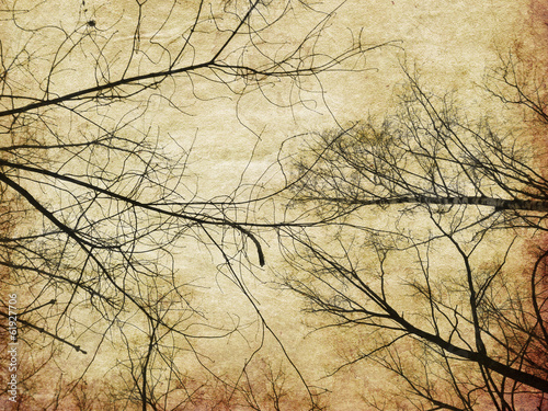 Grunge bare trees silhouettes - 61927706