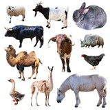 Set of farm animals. Isolated on white