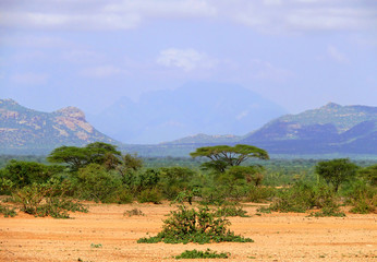 Jungle-covered mountains. Africa, Ethiopia. Landscape nature.