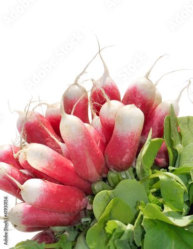 radis roses