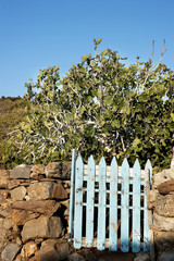 Fence and garden gate in Mediterranean Island