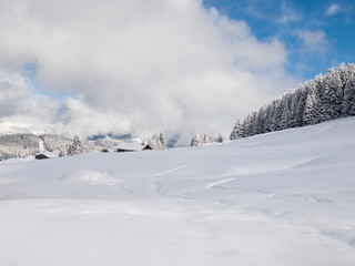 Snow Covered Alpine Meadow
