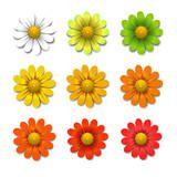 Fototapety Vector flowers