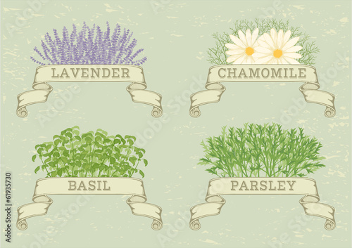 isolated herbs,lavender,chamomile,  parsley, and basil,
