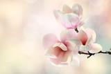 magnolia © magdal3na