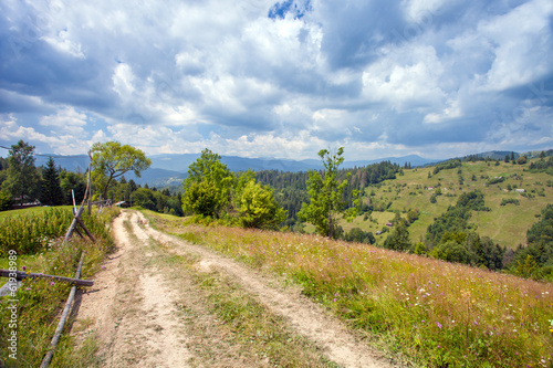 Trail through lush green forest in Carpathian mountains