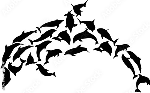 complex black dolphin on white - 61939196