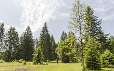 Saignelégier, Jura, Mittelgebirge, Sommer, Wanderweg, Schweiz