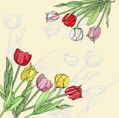 Background with pink, red and yellow tulips.Vector illustration