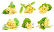 Set of linden flowers