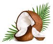 Coconuts with leaves. - 61943796