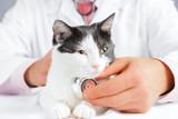 Vet listens a feline poster