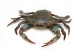 Leinwandbild Motiv Blue crab