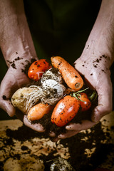 hands with biological vegetables