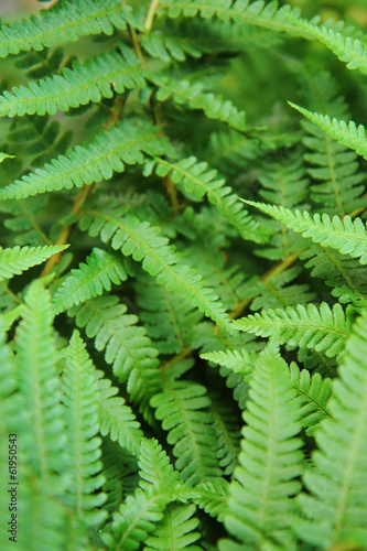 green leafy background from the forest