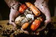 hands with biological vegetables