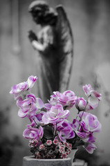 Preghiera rosa