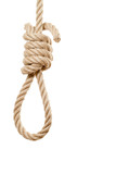 Noose on white background