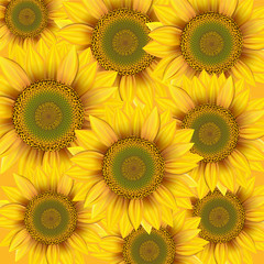 Nature background with yellow sunflowers.