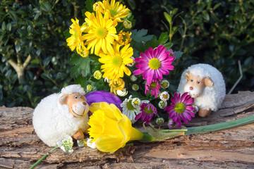 Lustige Schafe