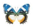 Schmetterling Fauenauge blau gelb