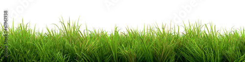 canvas print picture Grass