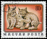 HUNGARY - CIRCA 1976: A stamp printed in Hungary shows two young