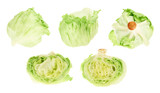 Green cabbage in different foreshortenings