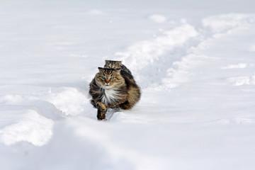Zwei Katzen rennen fröhlich durch den Schnee