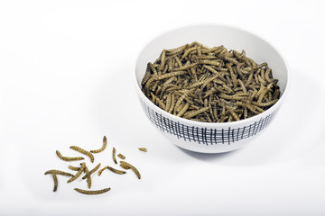 Bowl of mealworms