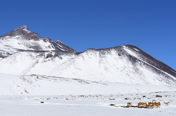 Atacama desert under snow