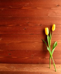 Yellow tulips on brown wooden background