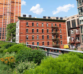 Vegetation and buildings of High Line Park in Manhattan