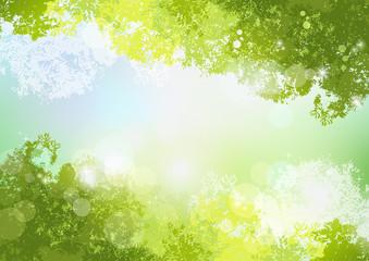 空 初夏 背景 新緑 自然 Fresh Spring Green background with soft sun light