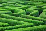 Fototapety Green plant maze