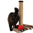 Black cat and cat scratching post isolated on white background