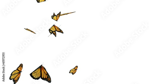Computer generated butterflies with alpha channel