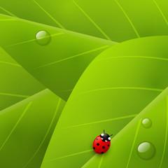 Green organic background
