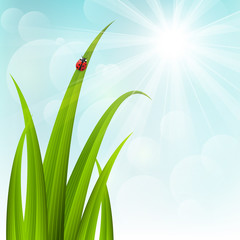 Spring grass on sunny background